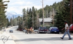 Residents mingle - Mr. Deer and Mr. Pedestrian.