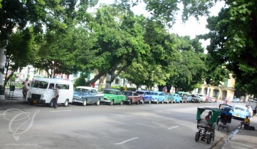 Look Dad, more cars! Regarde P'pa, d'autres voitures!