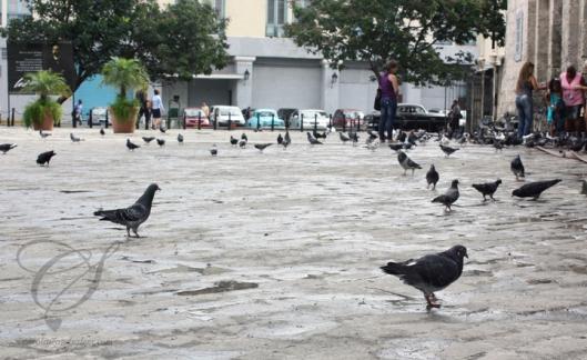 The pigeons love it here too! Les pigeons aiment aussi jouer aux touristes!