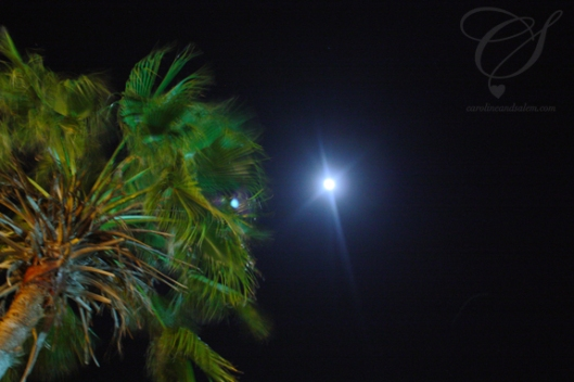 A palm tree and the full moon. Un palmier et la pleine lune.