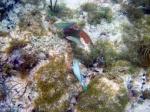 Colourful fish and coral. Des poissons de totues les couleurs et du corail.