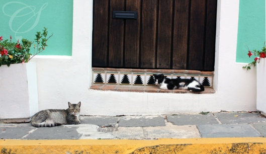 Local cats. Les matous du coin.