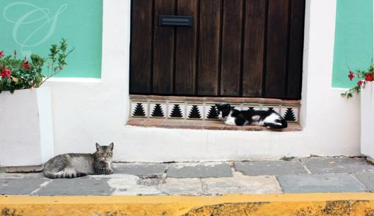 Local cats. Les matous du coin.