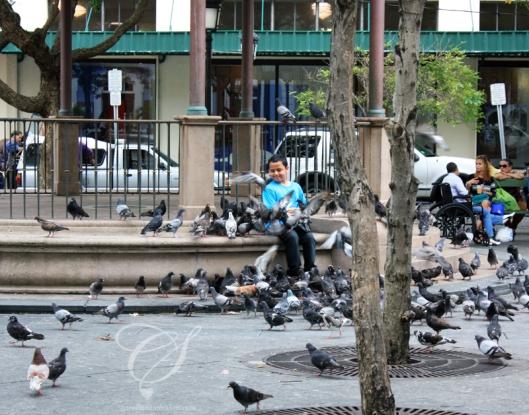 Pigeons flying around a boy in a plaza. Des pigeons volent alentours d'un garçon dans une plaza.